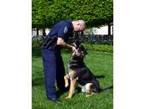 K-9 Handler Giannini - Grass With Dog